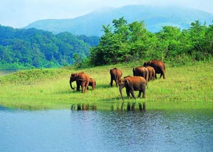 Zuid India Natuur reis   India reizen   Dimsum - Inleiding
